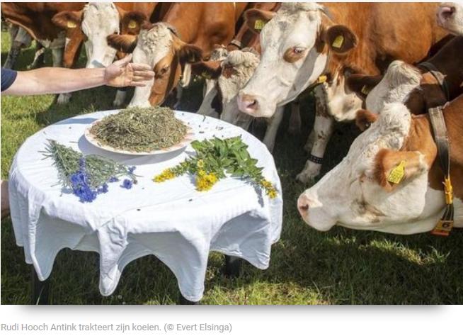 All-inclusive voor de koeien