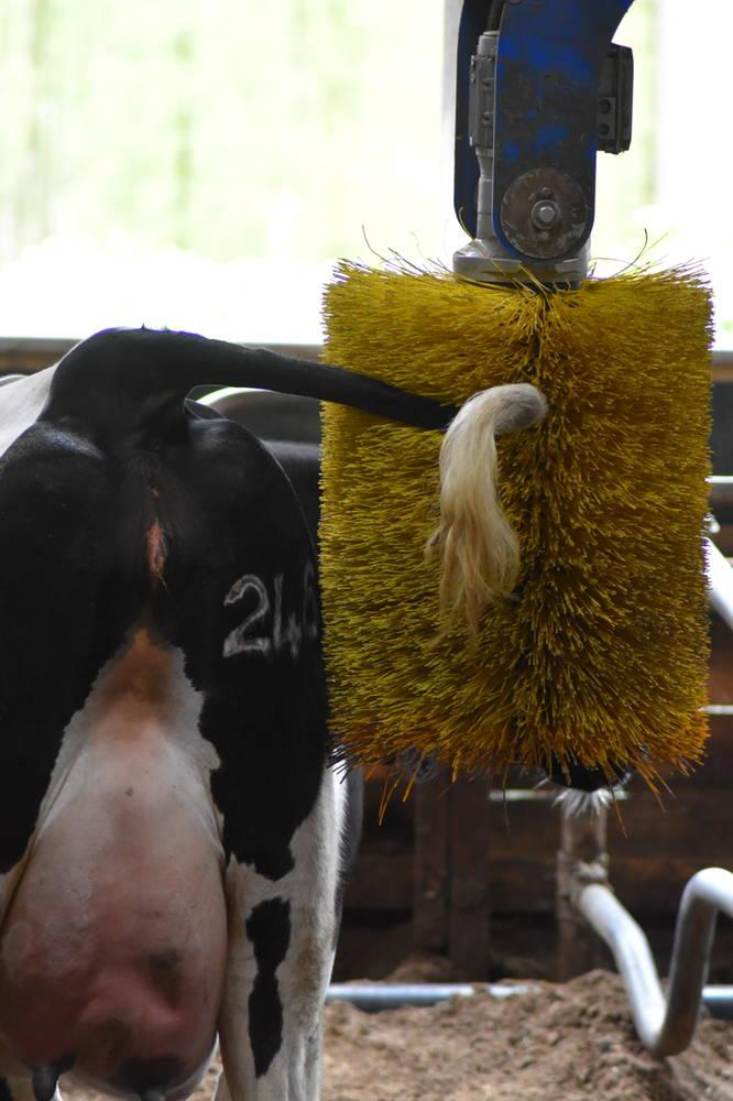 Dierenartsenpraktijk Beilen - Koeborstel melkvee - dierenwelzijn (foto door: Farmer Pixels by Mariël)