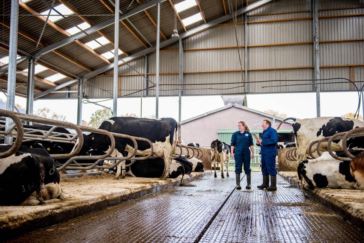 Nieuwe huis voor de koeien