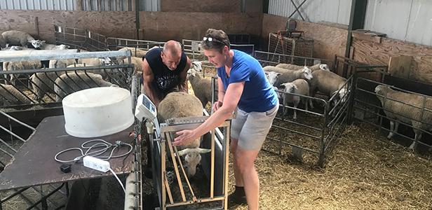Gradus en Alie Zoelman, schapenhouders dierenartsenpraktijk Beilen