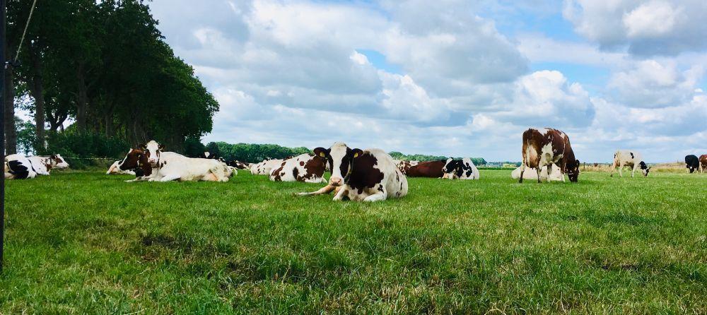 De boer op: stikstof, eiwit en koeien