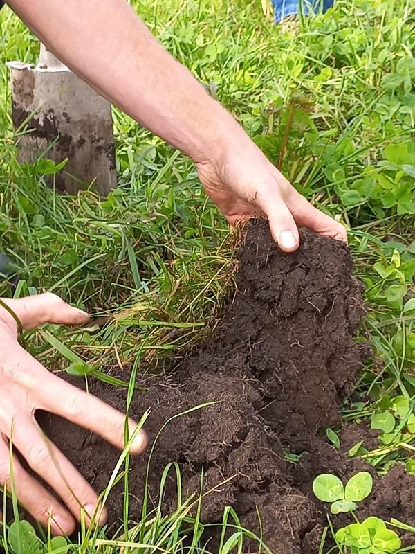 Kruidenrijk grasland op het melkveebedrijf, wat kun je ermee?