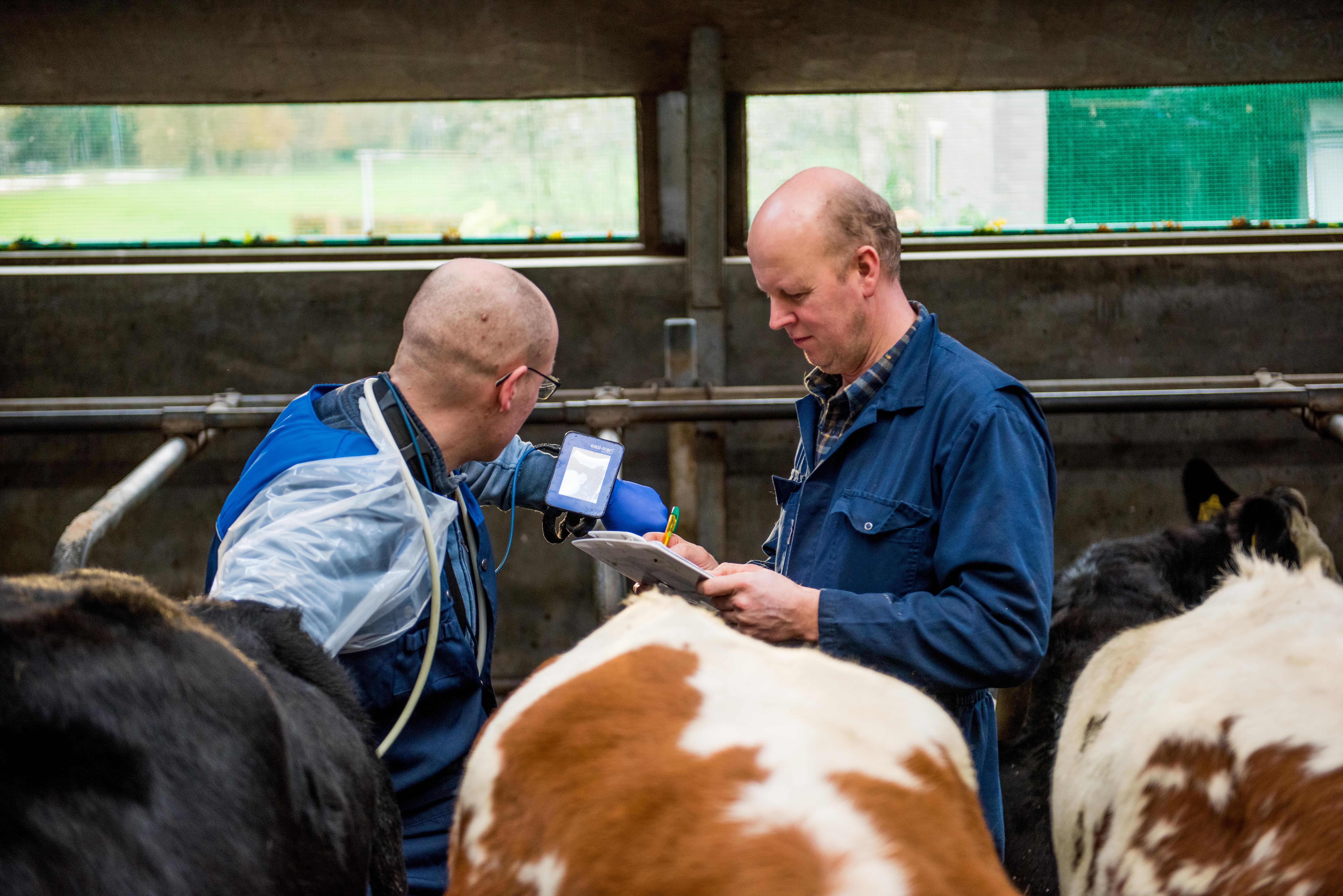 Dierenartsenpraktijk Het Drentse Hart - Gezonde Koeien Beter Boeren